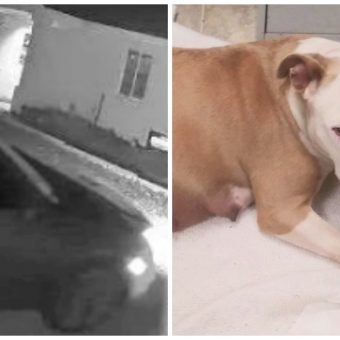 They Dragged & Stuffed Her Pregnant Body In A Trunk & Dumped Her In Empty Lot