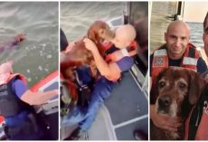 Elderly Dog Thanks Coast Guard With Kisses After They Pull Him From Choppy Sea