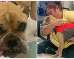 Shelter Calls Woman 10 Years After She Gave Up Hope Of Finding Lost Dog