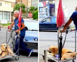 Devoted Dad Won't Let Arthritis Depress Senior Dog, Takes Him On Walk Every Day