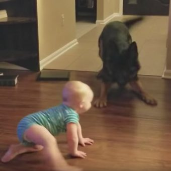 Dog And Baby Engage In A Game Of Chase That Left Mom With No Choice But To Record Them Both