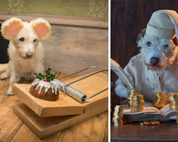 Photographer Dresses Up His Dog Every Year For The Family Christmas Card