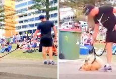 "Dog Doesn't Want To Go Home From Park, ""Plays Dead"" As Crowd Cheers Him On"