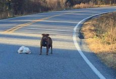 Cars Come To A Halt As Dog Proudly Flaunts His Frozen Turkey In Middle Of Road