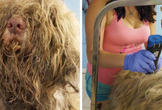 Dog Groomer Opens Shop In Middle Of The Night To Give Stray Dog Haircut And Found Beauty Beneath Matted Fur