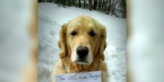 """Dog Hides In UPS Truck And Rides All Over Town, Wearing Note With An """"Important Message"""" For All"""