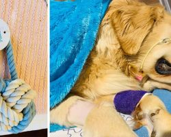 """Dog Owner Posts """"Heartbreaking Warning"""" After Golden Retriever Dies From Rope Toy"""