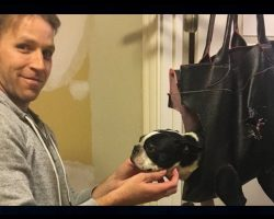Dog Refused To Have Her Nails Clipped, Dad Invents Contraption To Solve The Problem
