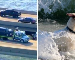 Dog Thrown Off The Bridge In Multi-Car Crash & Yelps For Help As He Hits Water