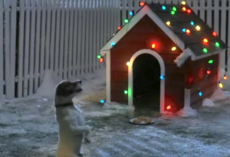 Dog Waits All Night For Santa, And His Christmas Wishes Comes True