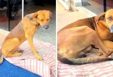Loyal Dog Doesn't Know His Owner Died, Still Waits Outside Hospital With Hope