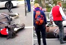 Carriage Driver Repeatedly Kicks Horse In Head After She Collapses From Exhaustion