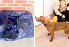 Sick Owner Seals Dog In A Duffel Bag & Tosses Him Over A Fence, Wanted Him To Die