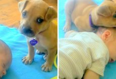 Dumped Puppy Doesn't Know How To Lie Down And Keeps Tumbling, Finds Comfort In Baby