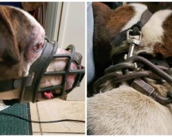 He's Dumped In Cold & Muzzled With 16-Pound Chain Embedded Into His Neck