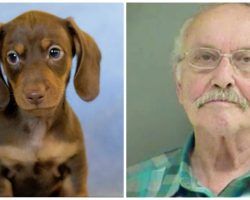 Vet Squeezes Puppy's Mouth Viciously & Squeezes His Stomach So Hard, Dog Dies