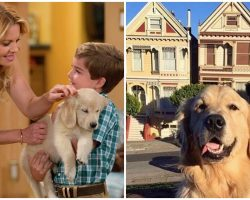 'Fuller House' Cast Grieving After Dog Co-Star Cosmo Dies From Surgery Complications
