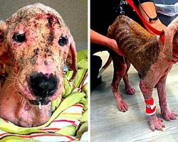 Owner Starves & Neglects Puppy To Near-Death, Surrenders Him To Escape Charges