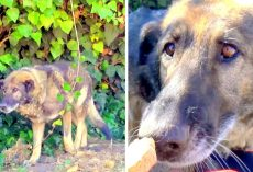 Monster Owners Abandon Sick Dog In A Park, Dog Cowers In Fear In A Garbage Pile