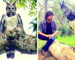 """Harpy Eagle Is So Huge That People Often Mistake It For A """"Human In Costume"""""""
