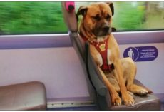 Homeless Dog Thinks No One Loves Her, So She Boards A Bus Alone