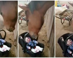 Baby Won't Stop Crying & Horse's Paternal Instincts Kick In To Quickly Soothe Her