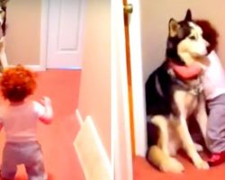 """Dog Protecting His Sister From """"Vacuum Monster"""" Shows Why Every Baby Needs A Dog"""