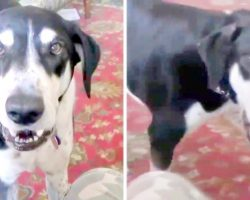 'Impatient Dog' Realizes He Can Talk, And The First Thing He Asked For Is A Kitten