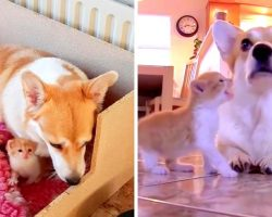 Dog Depressed After Her Puppies Die, Adopts Lonely Kitten Who Made Her Smile Again