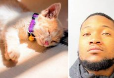Man Stomps GF's Cat To Death After She Breaks Up With Him, Dumps Body In Dumpster