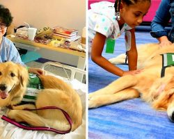 Beloved Children's Therapy Dog Diagnosed With Cancer, She Needs Our Prayers Now