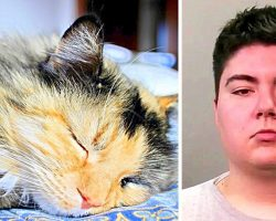 Man Ties Cats With Duct Tape, Beats Them & Dumps Them In Chute, Cats Die On Impact