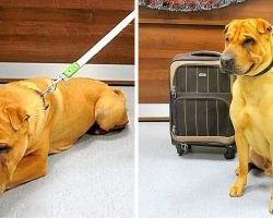 Woman Ties Dog To Suitcase & Dumps Him At Train Station After She Failed To Sell Him