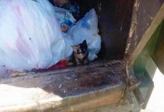 Garbage Man Spots Tiny Kitten In One Of The Bags In His Truck