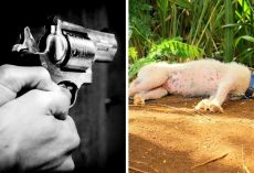 2 Neighbors Quarreling Over Dog Start Firing, Dog Gets Shot In The Head & Dies