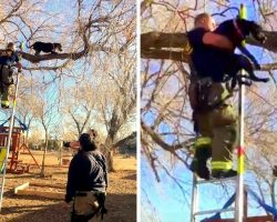 Squirrel Chasing Dog Gets Herself Stranded Atop Tall Tree, Starts Losing Balance
