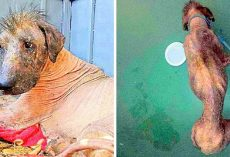 Sickly Homeless Dog Was Called A Monster & Stoned Whenever He Begged For Help