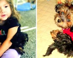 Habitual Thief Targets Woman While She Watches Her Kids, Runs Away With Her Dog