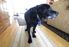Mailman Watches Senior Dog Struggling Up The Stairs Every Day, Decides He Has To Intervene