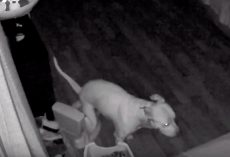 Man Checks Security Cam And Saw His Dog Using Training Potty In Middle Of Night