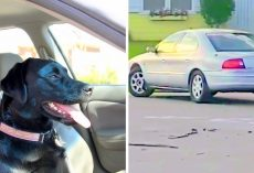 Innocent Dog Accidentally Puts Car In Reverse & Drives In Circles For A Full Hour