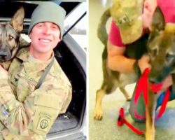 Military Dog Ends Up Abandoned After Service, Reunites With Handler After 3-Years