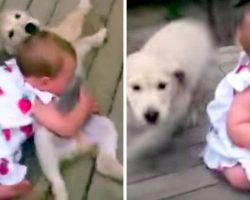 """Mom Was """"Warned"""" Not To Let Pup Near The Baby And She Did It Anyway"""