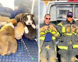 Brave Fire Crew Rescue 8 Puppies Stuck Under Apartment, Mama Dog Still Missing
