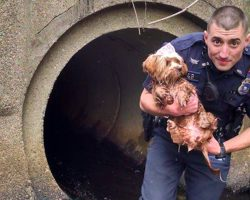 Cop Kicks Off His Socks And Shoes To Save Scared Dog Stuck In Tunnel
