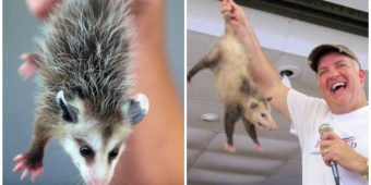 State Allows Opossums To Be Dropped From Sky To Ring In The New Year