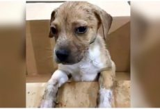 Workers Find Puppy In Trash Pile After He Somehow Survived The Compactor