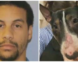 Every Day For 4 Years, Guy Beat Dog & Rubbed Her Face Into Concrete