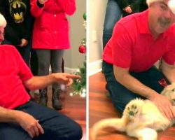 In A Twist, Kids Get Dad A Puppy Instead. Dad Can't Handle It & Leaps Like A Kid