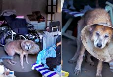 Old Gal Bolted In Room Barked To Be Let Out, Town Heard & Did Nothing